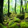 ◆レイキ体験談(1)(2)✿あなたが持つ自然治癒力の奇跡◆の画像