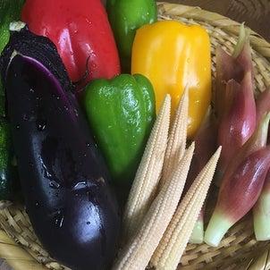 EXVオリーブオイルで夏野菜の揚げびたし の画像