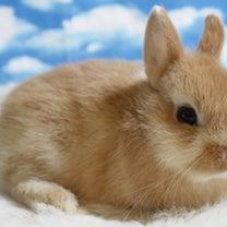 明日、5羽のウサギがやって来ます!!の記事に添付されている画像