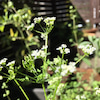 お弁当に!ハーブ香るオニオン&ベーコンブレッドの画像