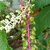 可愛い今の植物の画像