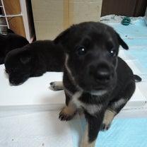 ご支援物資のお願い【犬 ①特に募集中の物資】の記事に添付されている画像