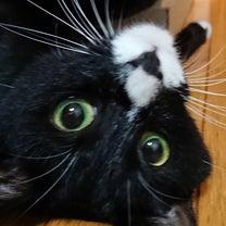 今後の治療のこと~久々に猫の記事に添付されている画像