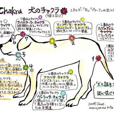 チャクラ✨犬ちゃん猫ちゃんの記事に添付されている画像