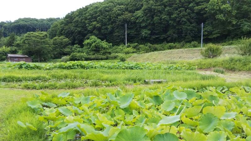 DSC_7855_HORIZON.JPG