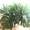 癒しのグリーンの画像