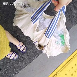 【移動篇】鳥と一緒に電車に乗って通院(動物病院へ)の画像
