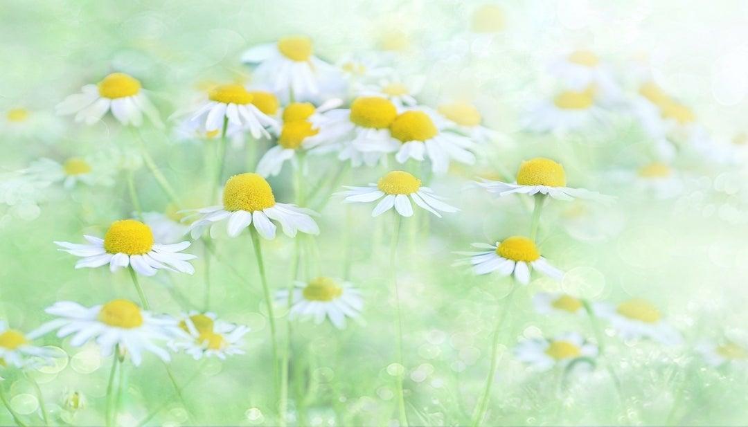 笑顔の花を咲かそうよ