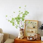 ★夏の間のわが家のグリーン事情♪フェイクも取り入れて楽に楽しむ