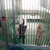 茨城センター 譲渡動物情報(2018年7月18日現在)