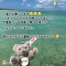 竹富島にて迷子のくま…