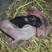 ネザーランドの赤ちゃん産まれました。