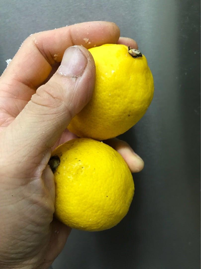 レモン 小林 幸子