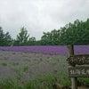 紫色の癒し☆の画像