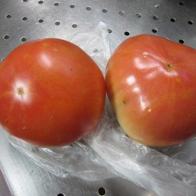 昔ながらのトマト~自然栽培・かしら農園~の記事に添付されている画像
