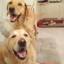 「犬は犬らしく」がモットーのペットホテルの記事に添付されている画像