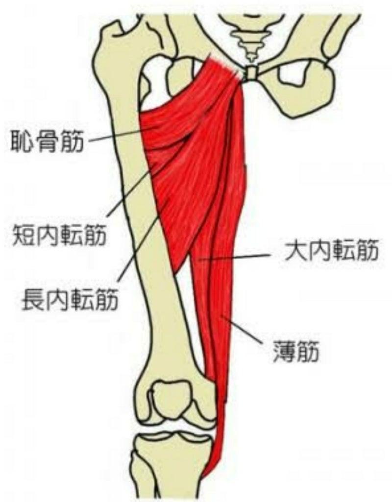 内転筋群 ストレッチ   長尾雄太の凸凹治療道