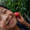 トマトちゃん♪の画像