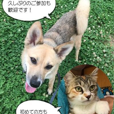 シェルター犬猫ボランティアさん大募集!!の記事に添付されている画像