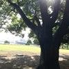 お気に入りの木の下での画像