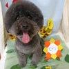 愛犬のためのサロン選び♪の画像