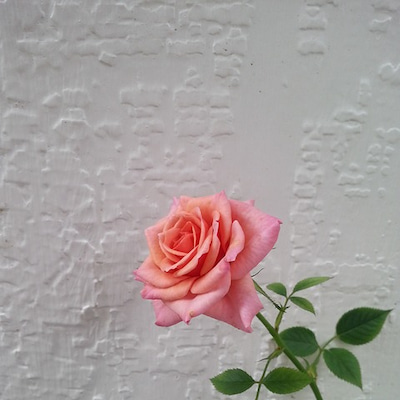 【保存版】「わたしの最高の薔薇ワーク♪」の記事に添付されている画像