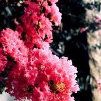 ♡8/5日曜日♡夏バテにアロマトリートメント♡の記事に添付されている画像