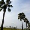 二色の浜海浜緑地公園BBQの画像