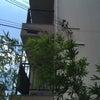 大阪北部地震のその後の画像