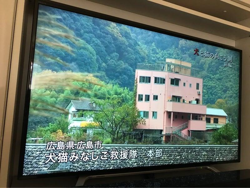 ザノン フィクション 関西 テレビ