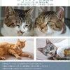 またまたやります!猫の譲渡会inイオンモール盛岡南の画像