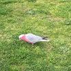 可愛い鳥さんたちに惹かれて購入したもの♪