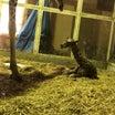 キリン誕生!!