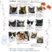 8月19日(日)開催‼️【 猫の譲渡会@豊田市動物愛護センター】