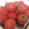 トマトソース Cookの画像