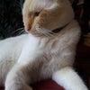 猫好きブログの画像