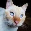 夜になると変身する猫の画像