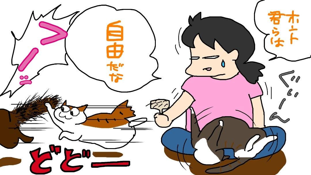 わが道を行く猫たち