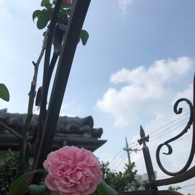薔薇が咲いた♫の記事に添付されている画像