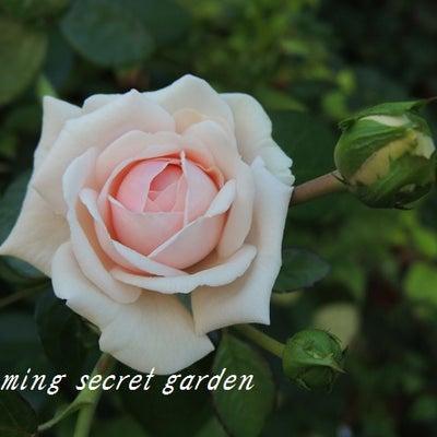 夏の庭とお出かけと・・・の記事に添付されている画像