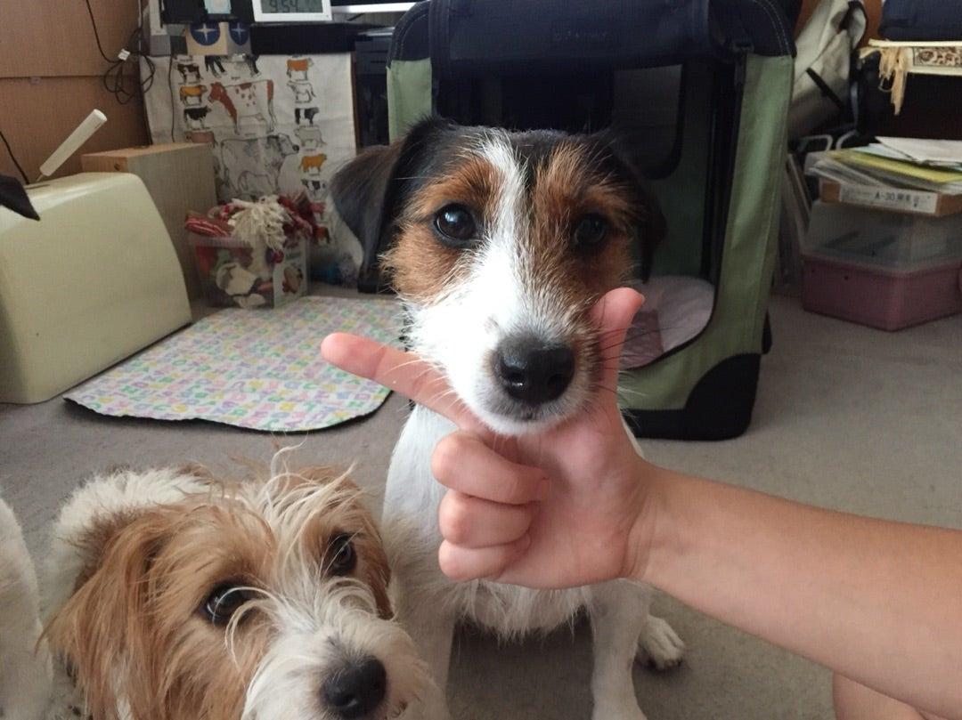 犬 あご のせ