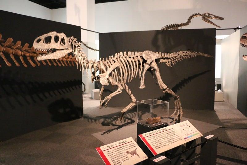 獣脚類・鳥に進化した肉食恐竜た...