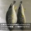 ▼唸声日本映像/フグの雑種化で毒はどうなる・・・?の画像