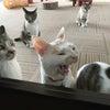 いよいよ明後日! 猫の譲渡会inイオンモール盛岡耳!の画像