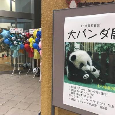 大パンダ展の記事に添付されている画像