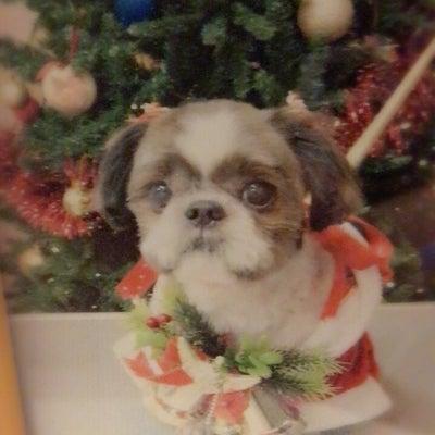 今日は先代愛犬セナの命日の記事に添付されている画像