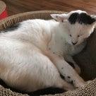 猫カフェ☆NEKO-TAMAの記事より