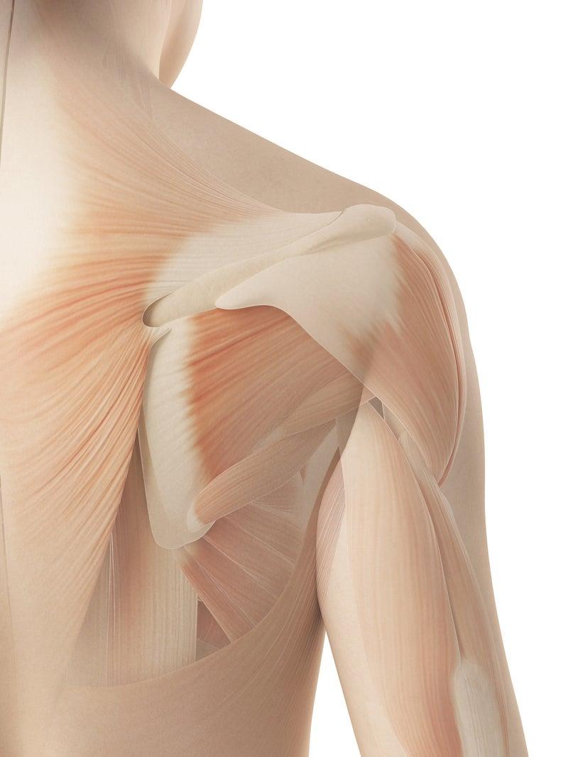 肩幅 を 狭く する 方法