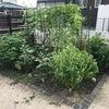 無農薬野菜の画像