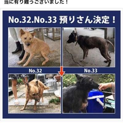 """預かりさん決定""""至急!新しい飼い主さん募集!!*No.31、No.32、No.3の記事に添付されている画像"""